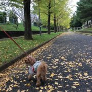 成田散歩 緑道の巻